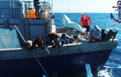 Tuna fishing in the Mediterranean Sea