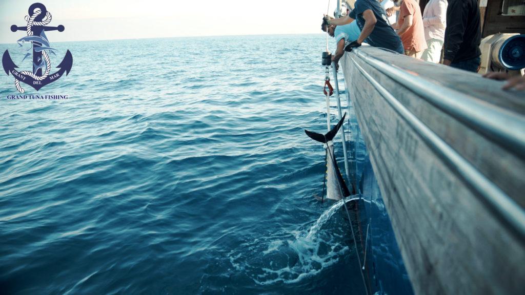 Fishing for tuna in the open sea