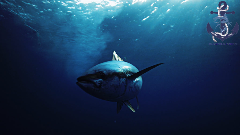 Fishing bluefin tuna