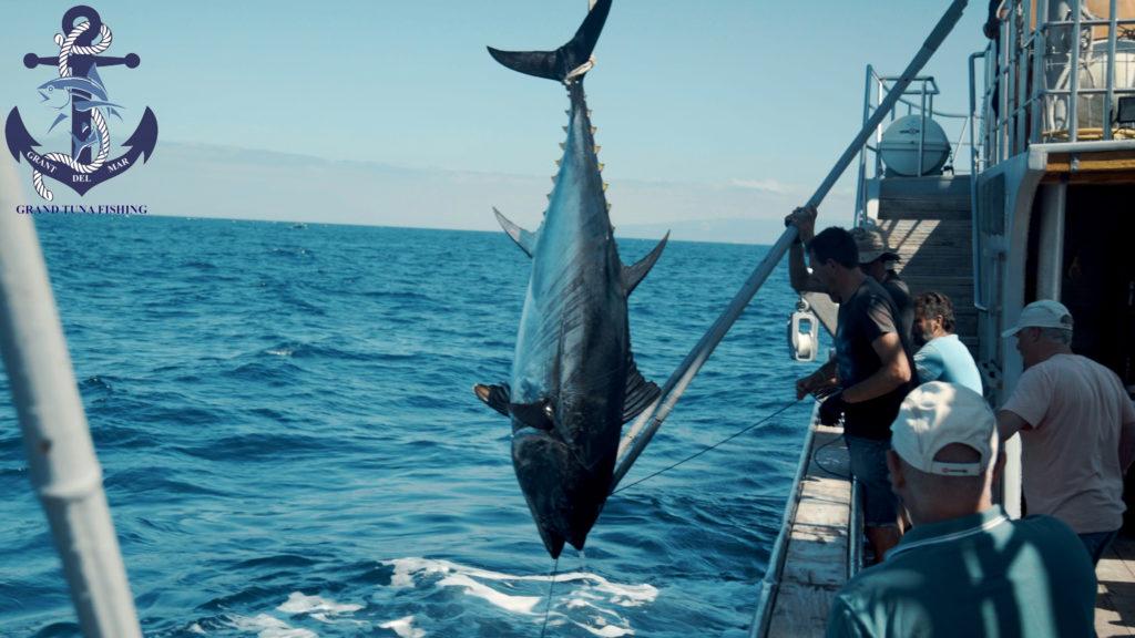 Hunting tuna