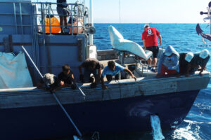 Hunting for tuna in Spain
