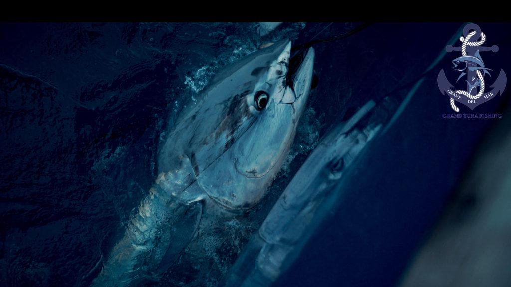 Fishing for bluefish tuna