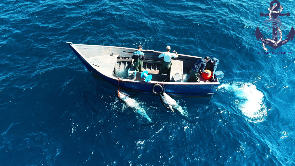Sea fishing in Spain