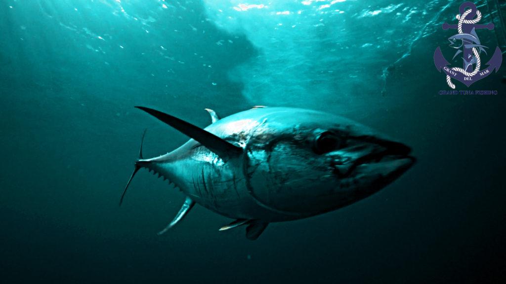 Fishing for tuna in the ocean