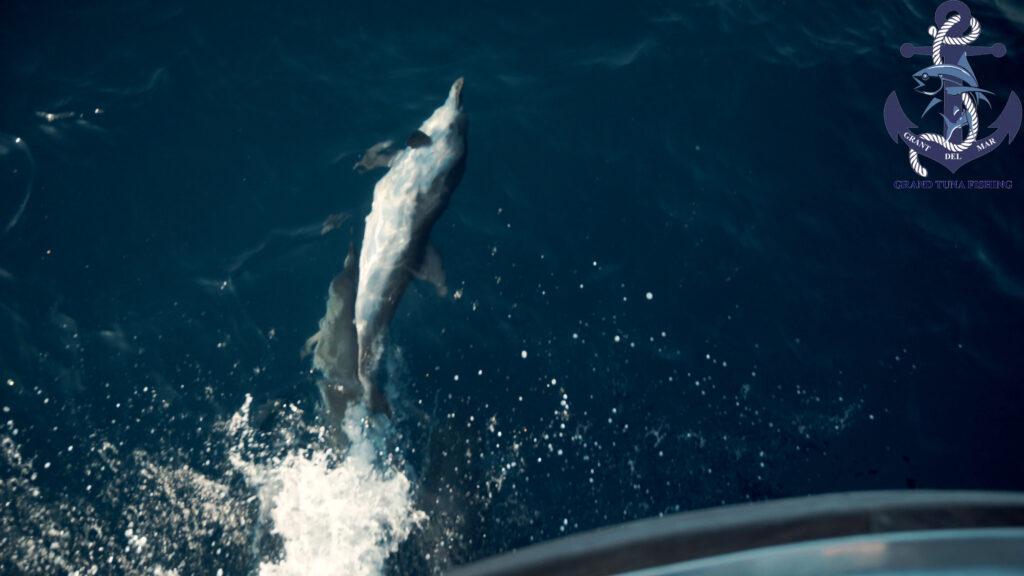 Pesca desde el barco