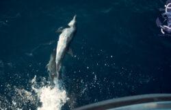 Pesca en el mar Mediterráneo