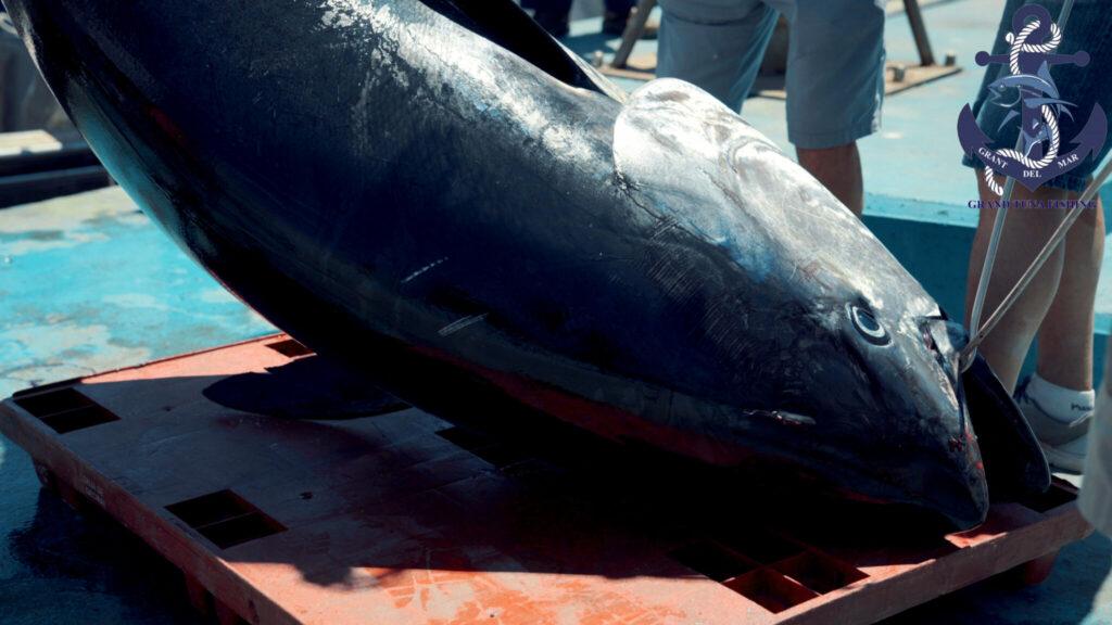 Pesca de atún en alta mar