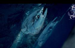 Ловля синеперого тунца