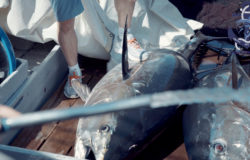 Рыбалка в море август